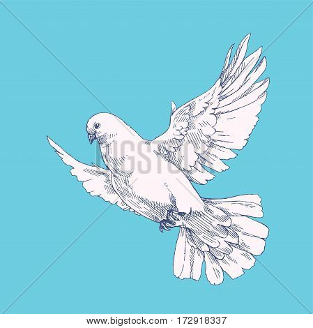 Soaring white dove. Vector hand drawn illustration of flying pigeon in the blue sky