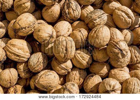 many walnuts close up