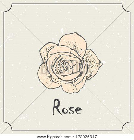 Monochrome rose flower. Vintage grunge marriage design template, floral artwork. Vector illustration of summer concept for invitation, card, flyer, ticket, boutique logo, label, banner.