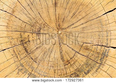 Yellow brown color of tree ring background