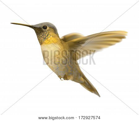 Flying Golden Hummingbird. Hand drawn vector illustration of a hovering golden bird with glowing plumage on transparent background.