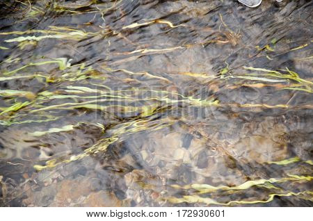The Flow Of The River In The Countryside With Grass
