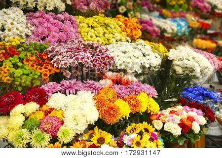 Plenty of colorful flowers in flower shop