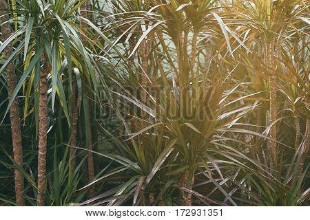 Beautiful plant foliage background