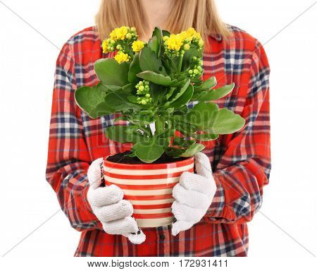 Female florist in gloves holding house plant isolated on white background