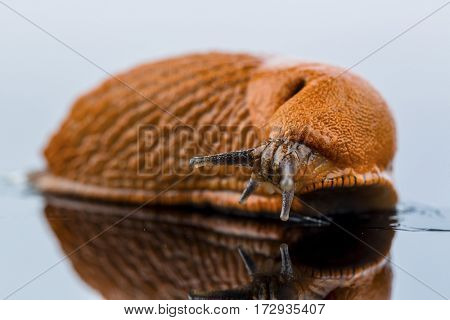 slug on a white background