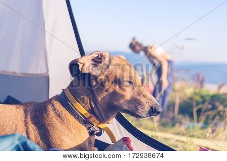Funny Dog Sleeps In The Tent - Wonderful Travel For All