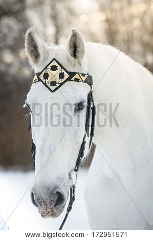 white trotter horse in medieval front headband outdoor horizontal portrait in winter