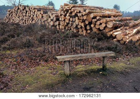 Pile Of Cut Logs On Heathland With Bench In Foreground