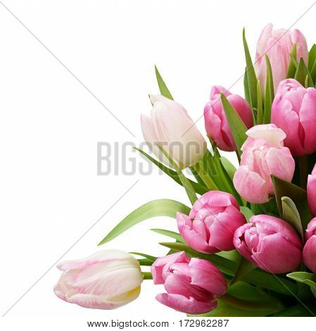 Pink tulip flowers bouquet isolated on white