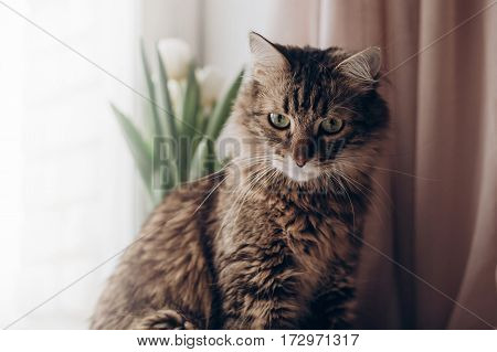 Beautiful Cat Looking With Amazing Green Eyes Big Whiskers And Funny Emotions On Background Of Windo