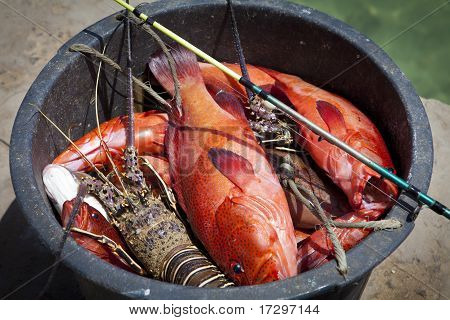 Fresh Lobster and red fishes in a basket poster
