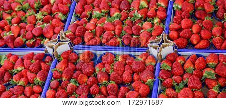 Large Red Ripe Strawberries In The Box At The Greengrocer