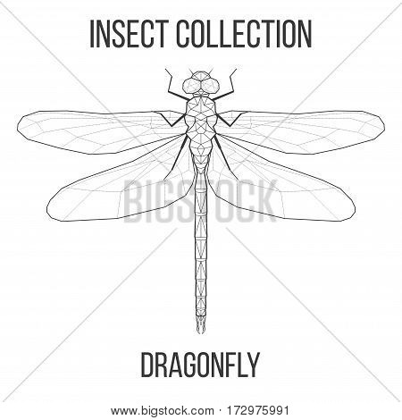 Dragonfly insect geometric lines silhouette isolated on white background vintage vector design element illustration