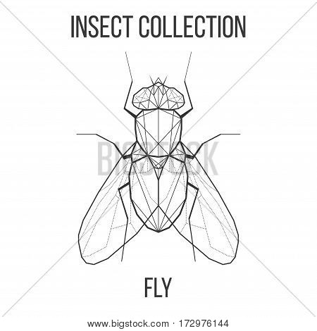 Fly insect geometric lines silhouette isolated on white background vintage vector design element illustration