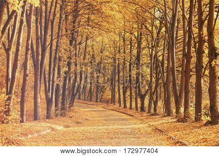 Beautiful autumn park background