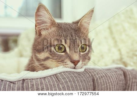 Cute cat in soft pet bed