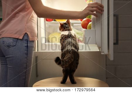 Young woman and cute funny cat looking inside open fridge