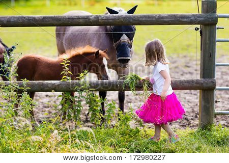 Little Girl Feeding Baby Horse On Ranch