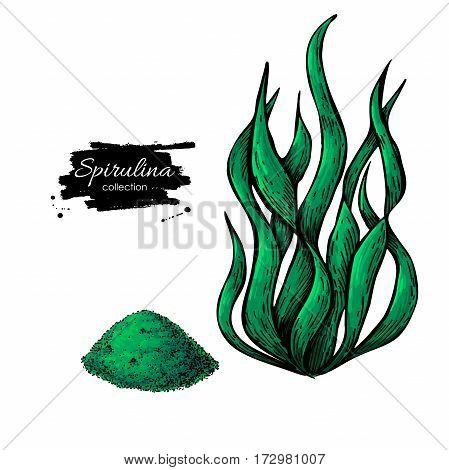 Spirulina seaweed powder hand drawn vector. Isolated Spirulina algae and powder drawing on white background. Superfood artistic style illustration. Organic healthy food sketch