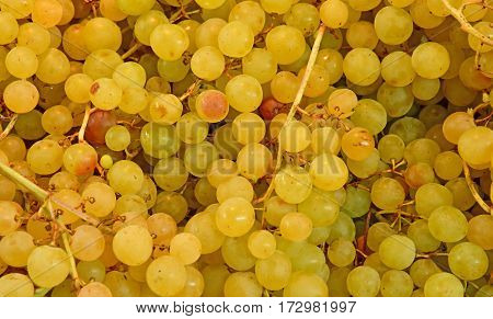 Verneuil sur Seine; France - october 16 2016 : stall of grape at the market in automn