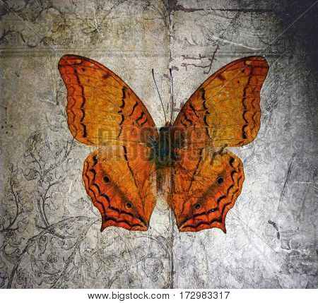 Grunge Butterfly background image