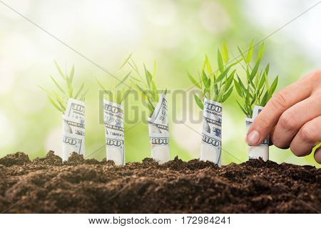 Close-up Of A Person Hand Planting Sapling Rolled With Banknote With Soil
