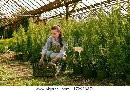 Pretty young gardener looking after decorative plants in plastic box
