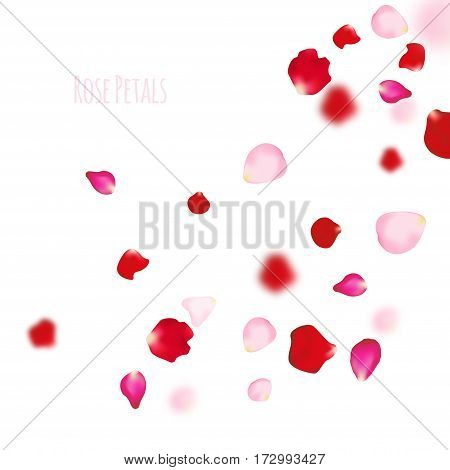Rose petals background. For presentations, invitation ad print. Wedding valentine love concept.