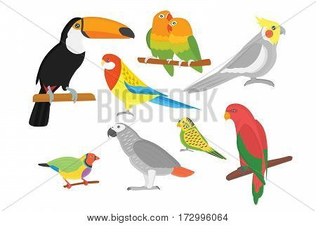 Cartoon tropical parrot wild animal bird vector illustration. Wildlife cute feather zoo color nature vivid. Perch tropics fly fauna jungle pretty macaw.