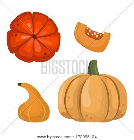 Fresh orange pumpkin isolated on white background. Decorative fresh single seasonal ripe food. Thanksgiving stem healthy raw vegetarian vegetable.
