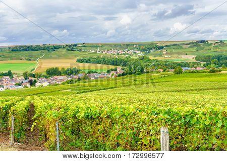 Champagne Vineyards at sunset Montagne de Reims France