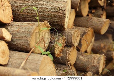 Wooden logs outdoor