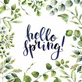 Watercolor Hello spring. Hand painted floral card with eucalyptus, fern and spring greenery branches isolated on white background. Print for design or background poster