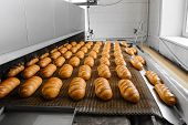 Loafs of fresh hot bread out of the oven on a conveyor belt in the bakery. poster