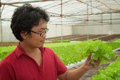 Farmer in hydroponic aquaculture hydro plant vegetable for make food and salad poster