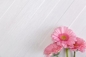 Pink gerbera flowers on white wood vintage background. 8 march or Valentines day love design. Fresh natural flowers. Painted wooden planks.