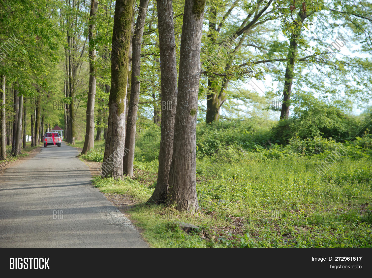 Machine Path Forest   Image & Photo (Free Trial) | Bigstock
