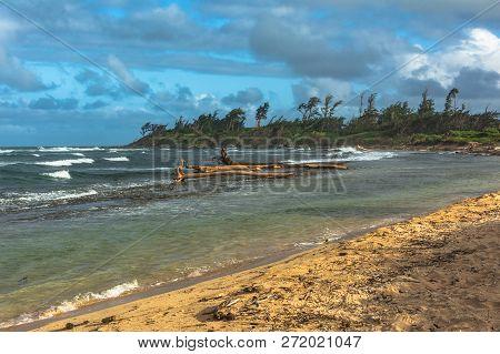 Dead Trees Along The Waipouli Coast, Kauai, Hawaii