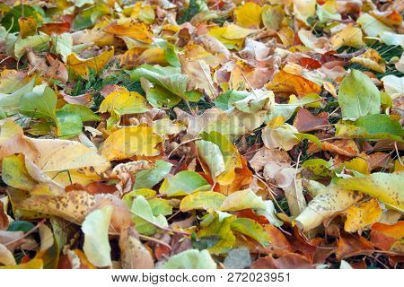 Colorful Leaves Close Up At The Grass. Background Of Yeallow And Orange Leaves. Autumn