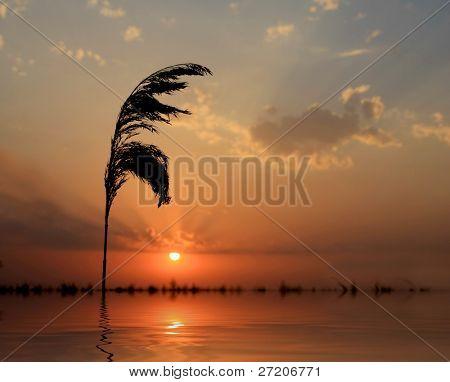 single cane on sunset background;