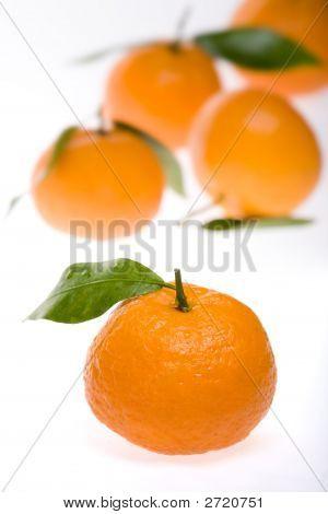 Tangerines On White Back Ground
