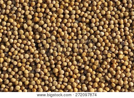 Yellow Mustard Seeds Also Called White Mustard, Sinapis Alba, Brassica Alba Or Brassica Hirta And Al