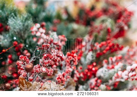 Christmas Decoration Background: Branches And Holly Berries