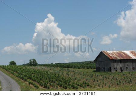 Tree Farm With Barn