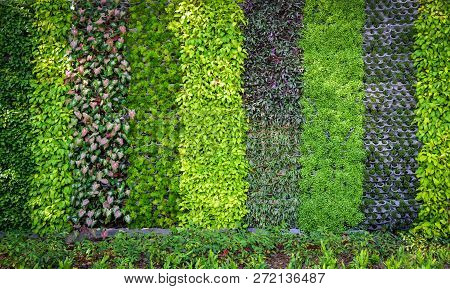 Green Plant Background / Pattern Wall Plant Texture Background - Green Leaves Various Types Backgrou