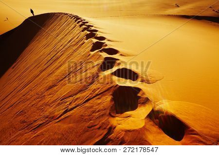 Sand dune climbing, sunrise, Sahara Desert, Algeria