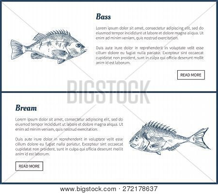Bass And Bream Seafood Set Vector Vintage Icons. Hand Drawn Fish Graphic, Decorative Illustrations O