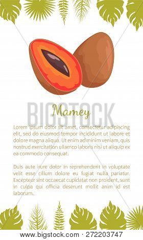 Mamey Exotic Juicy Fruit Vector Poster With Text Sample And Palm Leaves. Edible Food, Dieting Mammea