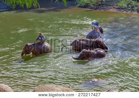Elephant Caretakers Riding Elephants Across The Banks Of The Maetaeng River In The Beautiful Maetama